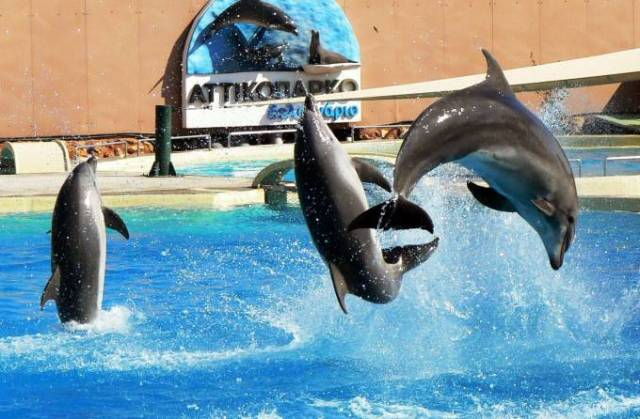 dolphins-delfinario__article